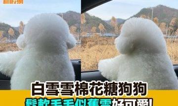【#網絡熱話】|白雪雪棉花糖狗狗