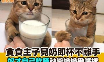 【#網絡熱話】|貪食主子見奶杯不離手