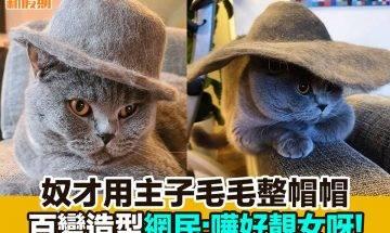 【#網絡熱話】|奴才用主子毛毛整帽帽