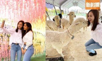 【大埔一日遊好去處】閨密打卡/情侶拍拖路線推介:賞花餵羊駝+人氣美食打卡|孖住去邊玩|周末遊懶人包