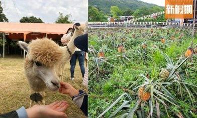 元朗有機菠蘿園農莊一日遊!佔地13萬呎 全港唯一可愛草泥馬農莊+自製菠蘿小食 附收費及開放詳情|香港好去處