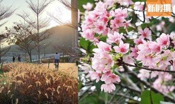 將軍澳好去處!單車/賞櫻花一日遊:賞櫻花+行DONKI+夾公仔+踩單車!扮去日本|周末遊懶人包