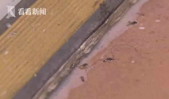 成都住酒店驚現滿床白蟻(圖片來源:《看看新聞》影片截圖)