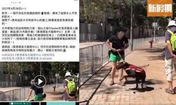 導盲犬遭訓練員拉扯至凌空!網友指為本地導盲犬機構訓練方法?大爆導盲犬辛酸史|網絡熱話