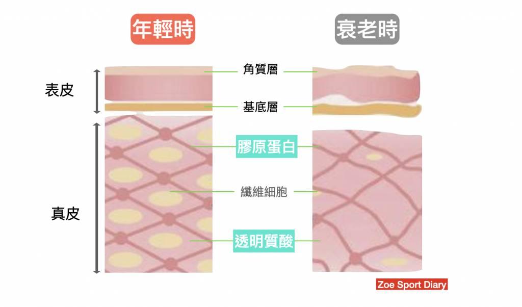 我們需要透明質酸及膠原蛋白撐起皮膚!