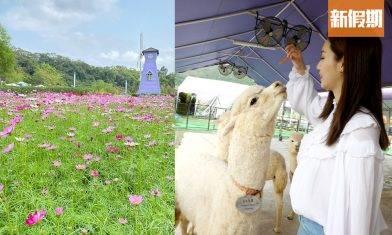 大埔蝶豆花園農莊一日遊 $299包3層Tea set+餵羊駝!50萬呎賞花海+天鵝湖踩船仔|香港好去處