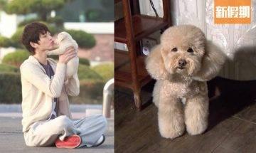 港女投訴男友愛狗多過愛自己!周年慶祝要留喺屋企照顧隻狗!「只想間中可二人世界 有錯咩?」|網絡熱話