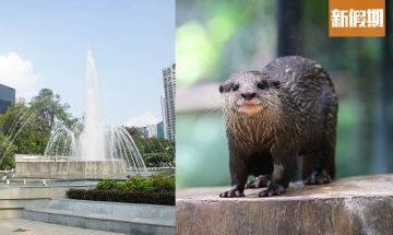 超萌水獺進駐香港動植物公園!免費睇餵食Show+全新觀鳥台+150周年活動率先睇